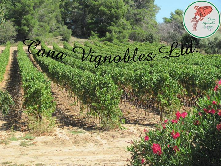 Cana Vignobles Limited 迦拿葡萄園有限公司