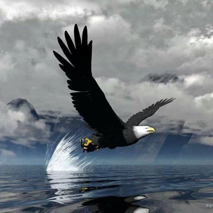 Fraternal Order of Eagles Aerie #4315