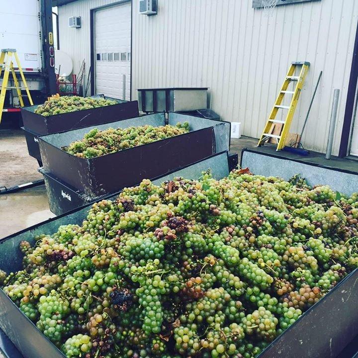 Massbach Ridge Winery Tasting Room Galena